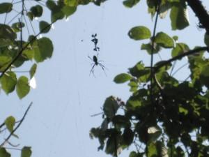 Arachnophobes Look Away