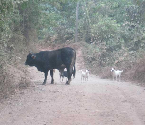 Road Bull